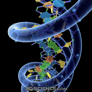 3d_model_DNA_w_phosphate_1