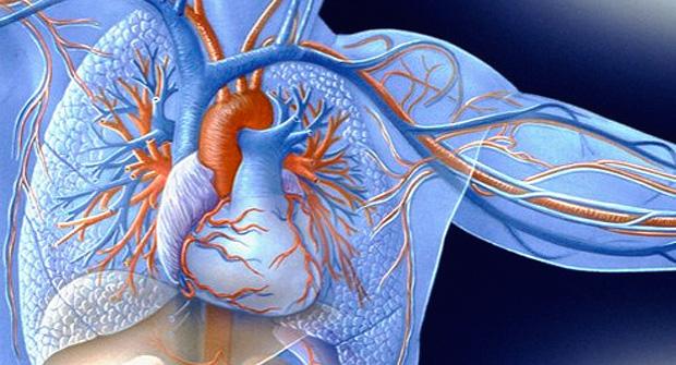 corazon-arterias
