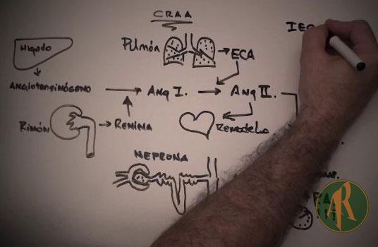 Ciclo-Renina-Angiotensina