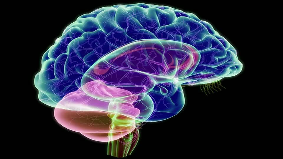 ventriculos cerebrales