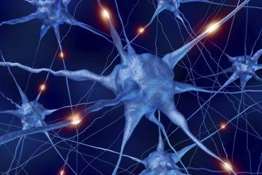 PW-2015-09-07-neurons