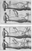 Figura 2: Esquema de circulación de G.Harvey