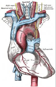Figura 4: Fístula Blalock-Thomas-Taussig