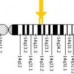 GCH1 gen located