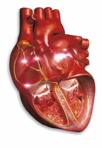 capa-fisiologia-cardiovascular_edited