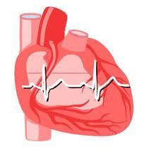 corazon - EKG