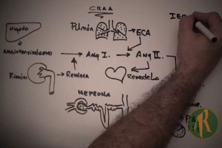 Ciclo renina-angiotensina