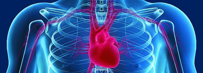 Xray of human heart
