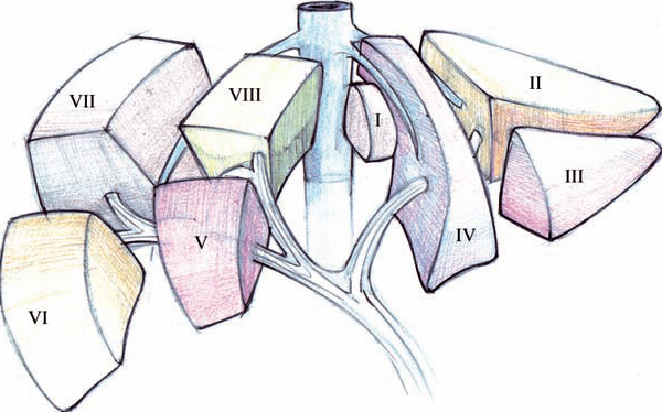 Figura-1.Segmentación-hepática