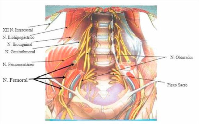 Anestesia Locorregional para Hernioplastia Inguinal